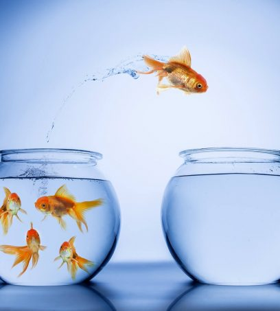 Values driven leaders enable better performance and do not act like fish out of water