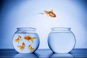 Values driven leaders do not act like like a fish out of water
